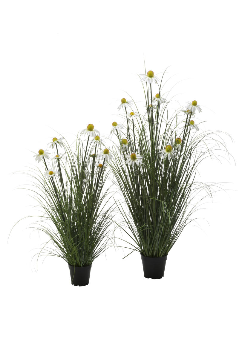 White Daisy in Wild Grass, Set of 2