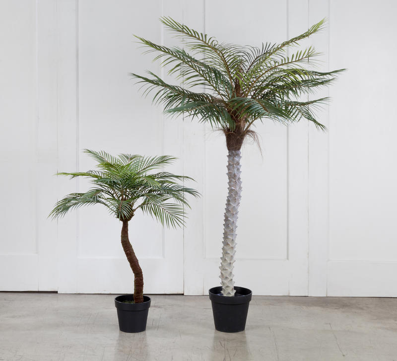 Decorative Palm Trees in Black Pots